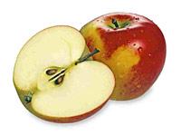 Mehr als nur EIN Kern, doch unverwechselbar im Profil: biblische Frucht.